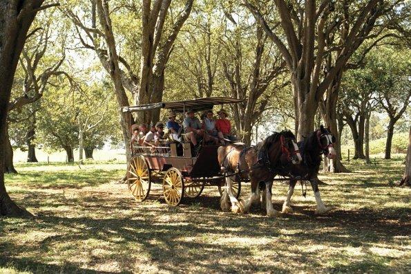 Norfolk Island Horse and Cart Ride. Credit: Norfolk Island Tourism