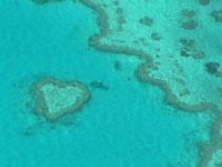 Whitsundays - Coral Reef Photo